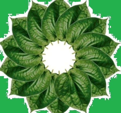 vilyadele - betel leaf