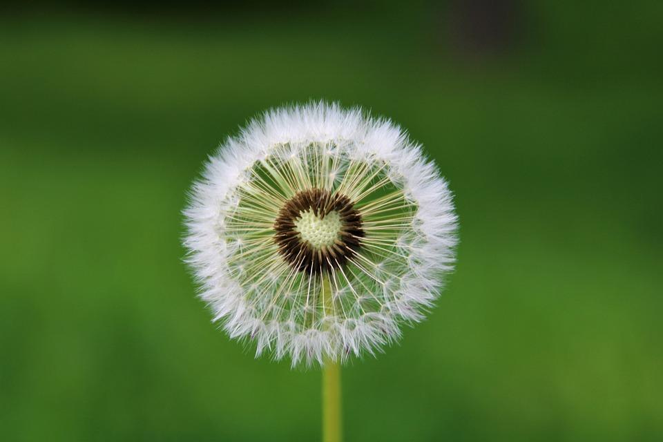 ಕನ್ನಡ ಗಾದೆಮಾತು  ಸಂಗ್ರಹ  ಭಾಗ – ೮ Wisdom Words Kannada