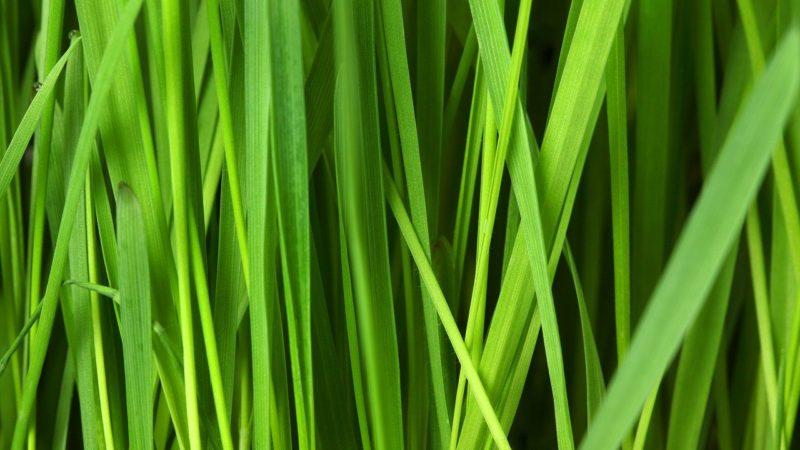 grass darbhe story