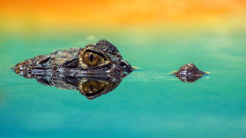 ಗಂಡ ಹೆಂಡತಿ ಜೋಕ್ಸ್ crocodile husband wife joke